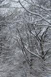 Priorità bassa degli alberi nella neve Fotografia Stock