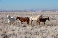 Priorità bassa dei cavalli selvaggi Immagine Stock Libera da Diritti