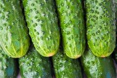 Priorità bassa dei cetrioli. immagini stock libere da diritti