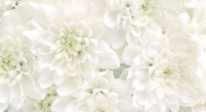 Priorità bassa dei fiori bianchi Fotografia Stock