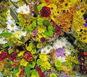 Priorità bassa dei fiori da taglio Fotografie Stock