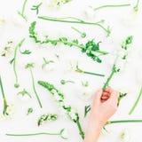 Priorità bassa dei fiori della sorgente Modello fatto dei fiori bianchi - il ranunculus, la bocca di leone, i tulipani e la mano  Fotografia Stock