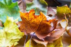 Priorità bassa dei fogli di autunno Priorità bassa di autunno Fotografie Stock