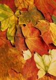 Priorità bassa dei fogli di autunno Immagini Stock Libere da Diritti