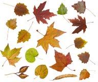 Priorità bassa dei fogli di autunno Immagini Stock