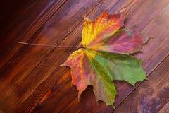 Priorità bassa dei fogli di autunno Priorità bassa di autunno fotografia stock