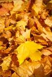 Priorità bassa dei fogli di autunno Fotografie Stock
