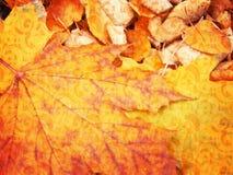 Priorità bassa dei fogli di autunno Fotografia Stock
