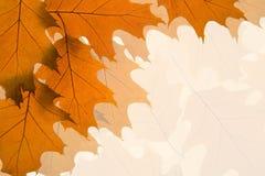Priorità bassa dei fogli di autunno immagine stock libera da diritti