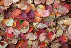 Priorità bassa dei fogli di autunno Fotografie Stock Libere da Diritti