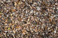 Priorità bassa dei fogli di autunno di caduta Fotografia Stock Libera da Diritti