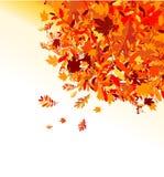 Priorità bassa dei fogli di autunno per il vostro disegno Immagine Stock Libera da Diritti