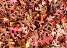 Priorità bassa dei fogli di caduta o di autunno Fotografia Stock