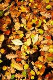 Priorità bassa dei fogli gialli Fotografie Stock