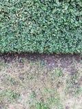 Priorità bassa dei fogli verdi freschi Il verde lascia la priorità bassa Fondo verde con le foglie Disposizione piana, spazio lib Fotografia Stock