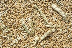 Priorità bassa dei granuli del frumento Fotografie Stock Libere da Diritti