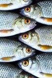 Priorità bassa dei pesci Immagini Stock Libere da Diritti