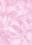 Priorità bassa dei petali Immagini Stock