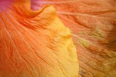 Priorità bassa dei petali del fiore Fotografia Stock