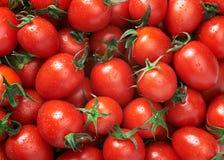 Priorità bassa dei pomodori Fotografie Stock Libere da Diritti