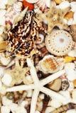 Priorità bassa dei Seashells Fotografia Stock