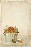 Priorità bassa dei Seashells Immagini Stock