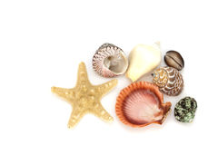 Priorità bassa dei Seashells Fotografia Stock Libera da Diritti