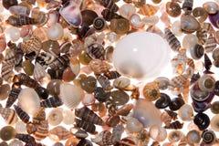 Priorità bassa dei Seashells Fotografie Stock