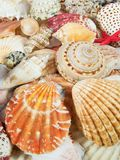 Priorità bassa dei Seashells Immagini Stock Libere da Diritti
