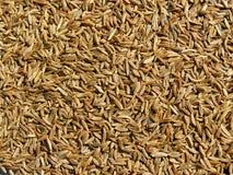 Priorità bassa dei semi di cumino dei prati Immagine Stock Libera da Diritti