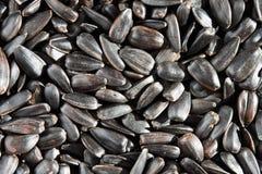 Priorità bassa dei semi di girasole. fotografia stock