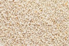 Priorità bassa dei semi di sesamo (indicum del Sesamum) Immagini Stock Libere da Diritti