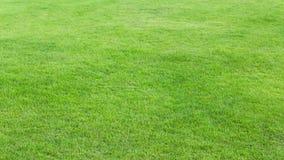 Priorità bassa del campo di erba verde Immagini Stock Libere da Diritti