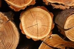 Priorità bassa del ceppo di albero Immagine Stock Libera da Diritti