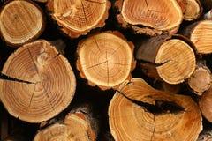 Priorità bassa del ceppo di albero Fotografie Stock