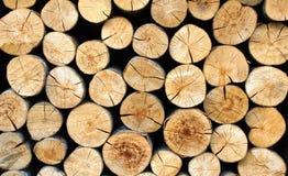 Priorità bassa del ceppo di albero. Immagine Stock