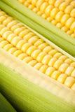 Priorità bassa del cereale Immagini Stock