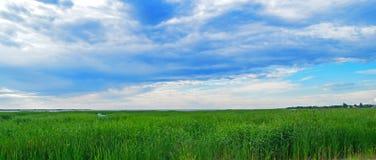 Priorità bassa del cielo e dell'erba Fotografia Stock