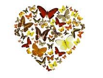 Priorità bassa del cuore delle farfalle Immagine Stock Libera da Diritti