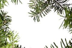 Priorità bassa del evergreen di natale immagini stock