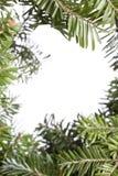 Priorità bassa del evergreen di natale fotografia stock libera da diritti