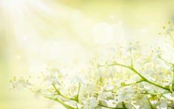 Priorità bassa del fiore Immagine Stock