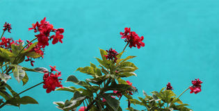 Priorità bassa del fiore fotografia stock libera da diritti