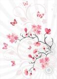 Priorità bassa del fiore di ciliegia Fotografie Stock Libere da Diritti