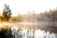 Priorità bassa del fiume e del sole della natura Immagini Stock Libere da Diritti