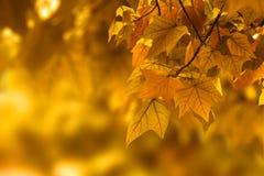 Priorità bassa del foglio di autunno Fotografie Stock Libere da Diritti