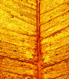 Priorità bassa del foglio di autunno fotografia stock