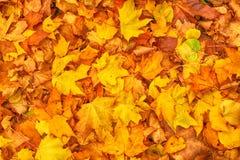 Priorità bassa del foglio di autunno Immagini Stock