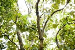 Priorità bassa del foglio e dell'albero Fotografia Stock Libera da Diritti