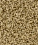 Priorità bassa del giaguaro Fotografia Stock Libera da Diritti